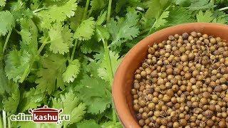 Как заготовить на зиму Кинзу (Кориандр) - Зелень и Семена