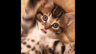 Смешные котята | Подборка видео приколов про милых и смешных котят
