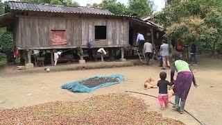 Quảng Trị: Gần 20 năm không có hộ tịch, hàng chục hộ dân ở Hướng Hóa gặp nhiều khó khăn