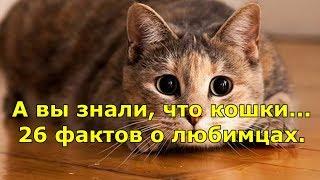 А вы знали, что кошки... 26 фактов о любимцах.