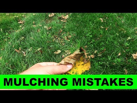 Number one mistake with leaf mulching