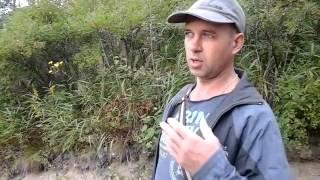 Настойка из оленьих рогов