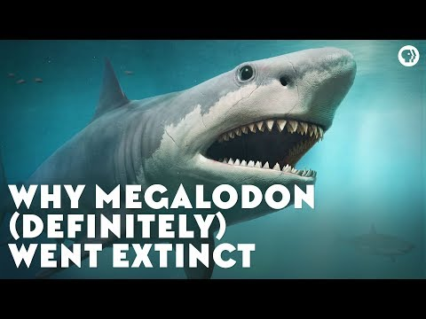 Why Megalodon (Definitely) Went Extinct