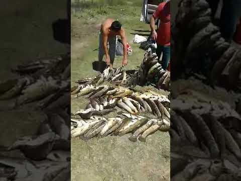 Thobias irmão do Mãe da Fome humilha Rogerinho em pescaria no Rio Paraguai