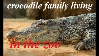 Crocodile in the zoo | crocodile family living in the zoo