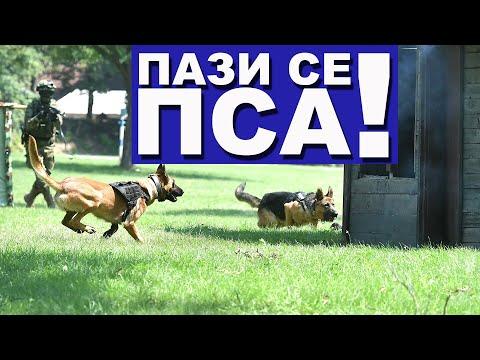 - Сваки сегмент Војске Србије заслужује подједнаку пажњу и поштовање зато што има разлога зашто постоји. Центар за обуку паса је такође веома важан део наше војске, службени пси олакшавају живот нашим војницима, али и чувају животе. У свим…