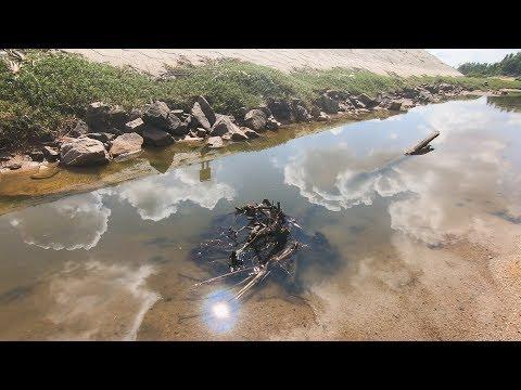 赶海发现水里的树桩不对劲,玉平往下一摸,竟掏出一只巨无霸来