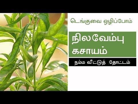 NILAVEMBU KASHAYAM   NILAVEMBU KUDINEER   Nilavembu Kashayam for Dengue Fever in Tamil