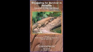 Struggling for Survival in Paradise   Iguanas in the Caribbean