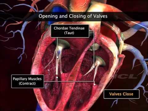 L-carnitina e lipertensione