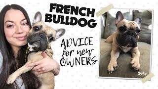 How To Take Care of A French Bulldog // Everything You Need To Know