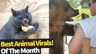 animale faze cu animale Iunie 2019