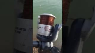 Yuvacik barajı sazan avı Mehmet arslantaş