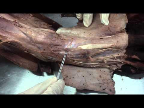 Jak usunąć grudki od palców