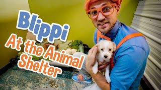 Caring After Pets with Blippi | Explore with BLIPPI!!! | Educational Videos for Toddlers