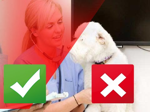 Video Top 10 Signs of Heart Disease in Dogs