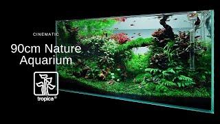 Inspiracja 90cm akwarium (Tropica)