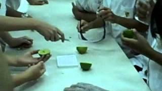 Grade 6 General Science Video.wmv