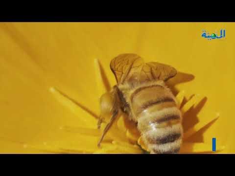 بالفيديو.. فنادق خاصة لرفاهية النحل بكولومبيا