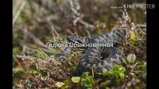 Животные Беларуси #1.
