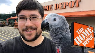 Baby African Greys Visit Home Depot