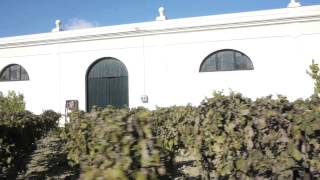 Old bodegas and Wine in Jerez