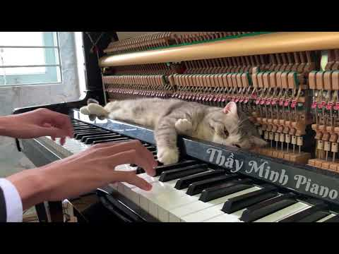 Cute Cat Gets a Piano Massage