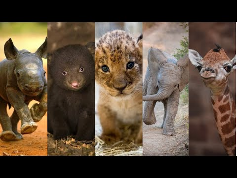 These Animal Babies Are Just TOO CUTE to Be True!