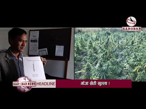 Making Marijuana Legal !
