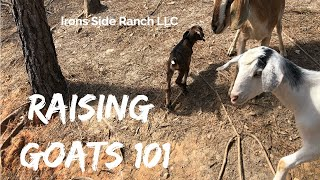 Goat 101: Lessons we learned raising goats and basic caring for your animals.