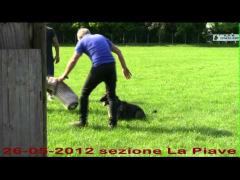 Preview video Incontro con Demis Benedetti