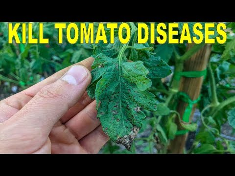 , title : 'Eliminate Tomato Diseases Naturally With Hydrogen Peroxide And Copper