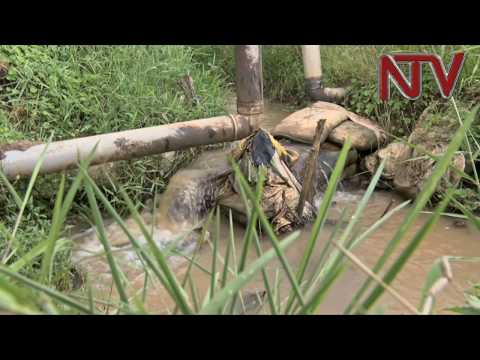 NTV PANORAMA: Human activity is killing Lutembe wetland in Wakiso