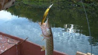 Рыбалка в липецкой области весной на одну удочку