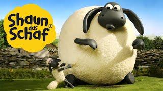 Supersize Timmy | Shaun das Schaf | Staffel 2 [Ganze Folge]