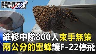 維修中隊800人束手無策 兩公分大的蜜蜂竟讓F-22停飛!? 關鍵時刻 20180920-5 黃創夏 朱學恒 劉燦榮