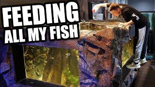 FEEDING ALL MY FISH - The king of DIY aquarium gallery