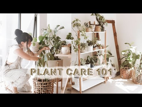 , title : 'How To Care For Indoor Plants + GREENIFY YOUR SPACE