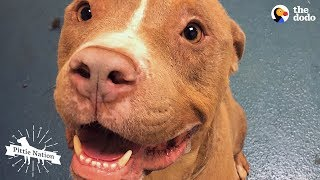 Guy On Road Trip Meets A Homeless Pit Bull | The Dodo Pittie Nation