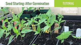 Seeds Have Germinated: Now What? How to Care for Seedlings | Seed Starting Part 2