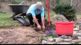 How to move (transplant) perennials to a new location