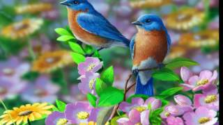 TWO BIRDS ON A WIRE (Regina Spektor) 1 HOUR LOOP