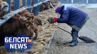 Беларуская глыбінка: Заробак $ 50 ужо падзея!   Катастрофа с зарплатами в белорусской глубинке