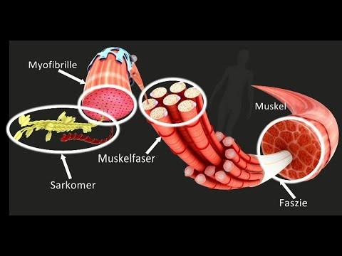 Die Osteochondrose schejno der Wirbelsäule die Symptome und die Behandlung