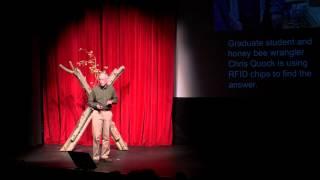 Flight of the Living Dead: Dr. John Hafernik at TEDxJacksonHole