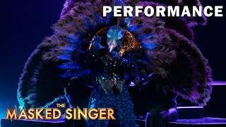 """Peacock sings """"The Greatest Show"""" by Hugh Jackman 