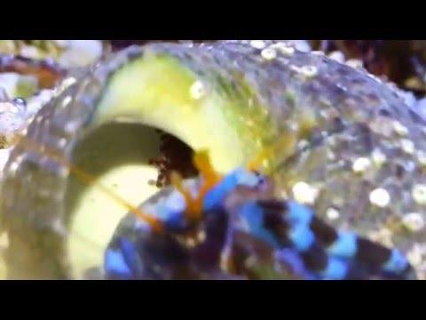 Duzzadt férgek rákos személyek - Papillómák és paraziták népi gyógymódok