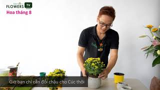[Flowers TV] Vài Bước Trang Trí Cúc Chậu Cho Nhà Thêm Xinh