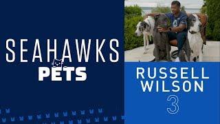 Seahawks Pets: Russell Wilson's Great Danes