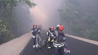 Пожары в Луганской области: госпитализировано 28 человек, 17 из них - дети